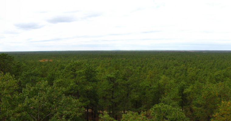 Are NJ Pinelands a Renewable Resource?